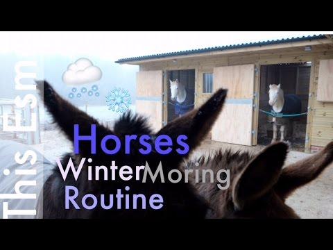 Horses Winter Morning Routine | This Esme