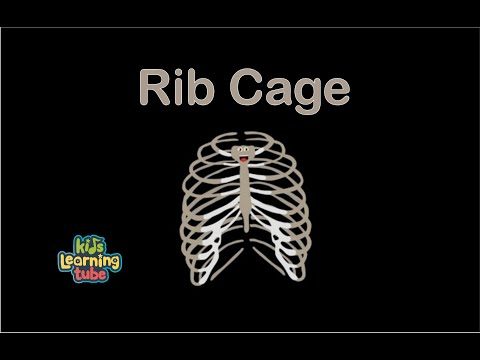 Rib Cage Song/The Human Body for