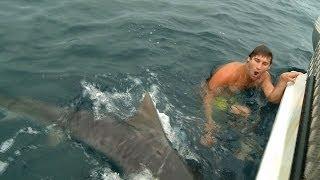 SHARK ATTACK NEAR MISS GOLD COAST
