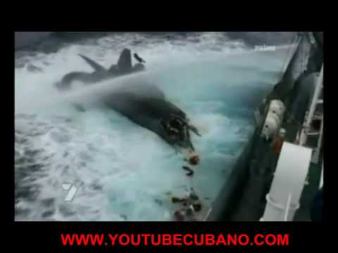 Barco de 2 millones destruido por ballenero Japones
