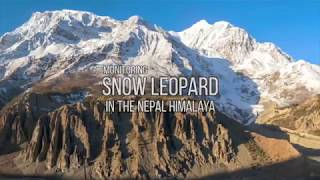 Monitoring SNOW LEOPARD in the Nepal Himalaya