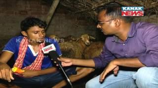 500 Sheeps Killed In 2 Months In Niali