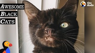 Black Cats Are AWESOME | Black Cat Compilation | The Dodo Best Of