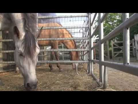 Self control, why male horses can do this from nature and female horses less