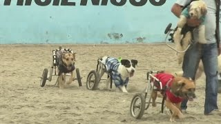 Woman in Peru adopts 70 sick and injured dogs