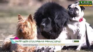 Addis Ethiopian News Feb 23, 2019