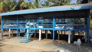 Profitable Tellicerry goat farm
