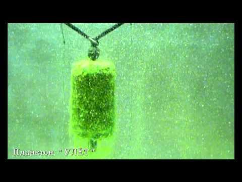 ловля на планктон их изготовление