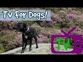 Download Video Download TV for Dogs! Audio with Visuals Therapy for Dogs, Help Entertain My Lonely Dog - Footage for Dogs 3GP MP4 FLV