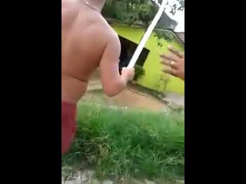 Briga de cachorros