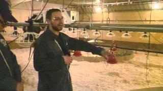 MacFarlane Pheasants Farm Tour - Brooder Barn