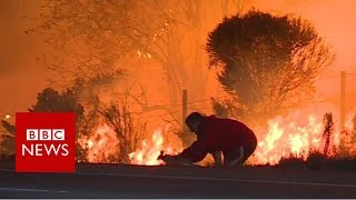 Man saves rabbit from California fires - BBC News