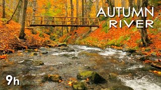 Autumn River Sounds -  Relaxing Nature Video - Calming Nature Sounds - 9 Hours LONG - HD 1080p