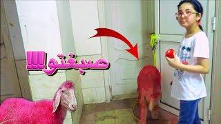 🔴 مقلب الخروف في شيرين🐑!! صبغتو احمر!!!