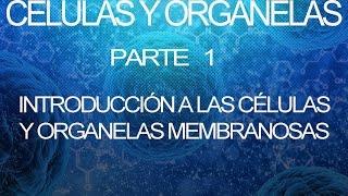 Células Y Organelas | Biología Celular Y Molecular [Parte 1]