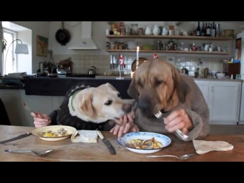 TWO DOGS DINING EATING AND MASTY