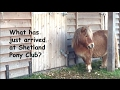 Download Video Download What has just arrived at Shetland Pony Club? TV Episode 111 3GP MP4 FLV