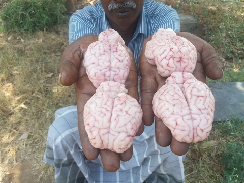 Cooking Goat Brain Fry in My Village My Village Food