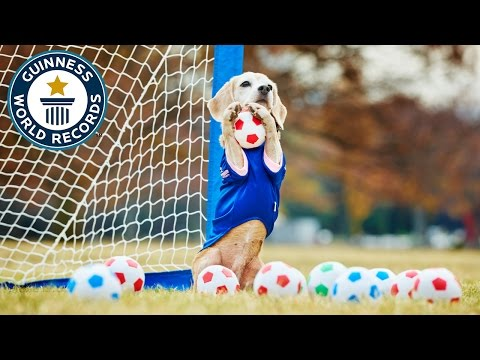 Most balls caught by a dog with the paws in one minute Guinness World Records