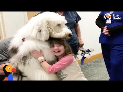 Xxx Mp4 Huge Dog Helps Sick Kids Feel Better The Dodo 3gp Sex