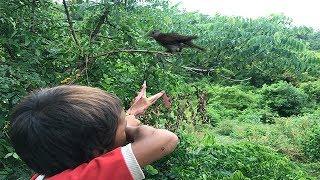 Amazing Slingshot Traditional-Boy Shot Many Birds In His Village