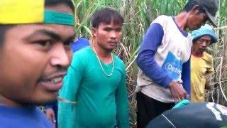 Berburu Babi Hutan Tradisional  Dusun Mingkrik Kec.Larangan.Kab.Brebes Jateng