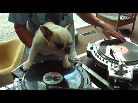 Xxx Mp4 DJ MAMA Scratch DUET W Truly OdD Greyboy French Bulldog Hip Hop 3gp Sex
