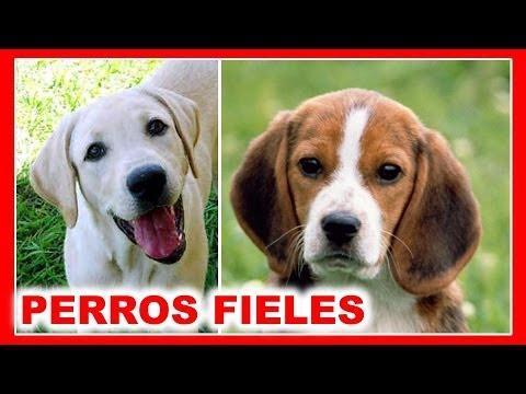 Los 10 Perros más Fieles del Mundo