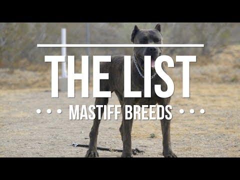 Xxx Mp4 THE LIST TOP MASTIFF DOG BREEDS 3gp Sex