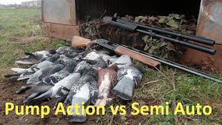Pump Action vs Semi Auto Pigeon Shooting