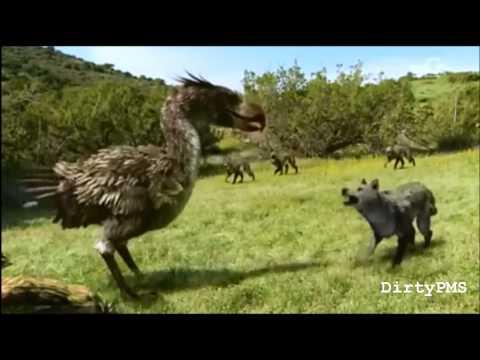 Terror Bird Denied