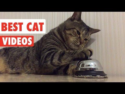 Best Cat Videos Ever | Funny Cat Video Pet Compilation 2017