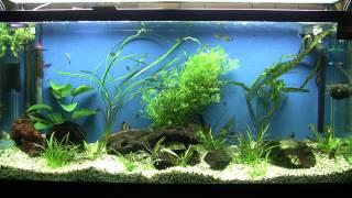 Fish Tank 2
