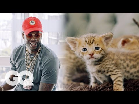2 Chainz Plays with 165 000 Kittens Most Expensivest Sh t GQ