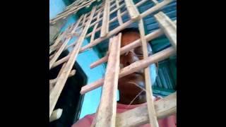 mesu টার্কি মোরগ পোষে মাসে লক্ষ টাকা আয় মিসু(10)
