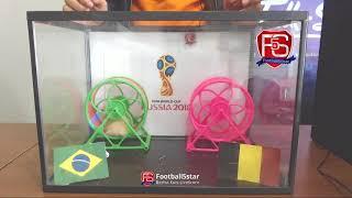 Prediksi Brasil vs Belgia bersama PO si Hamster