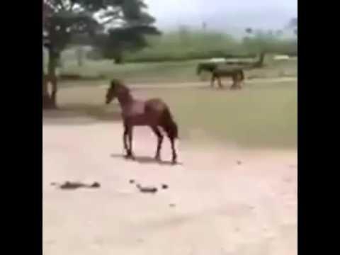 gay horse