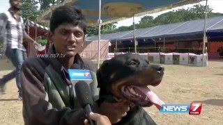 Chennai dog exhibition attracts viewers | News7 Tamil
