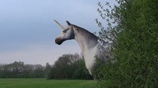Unicorn Sighting Caught on Camera