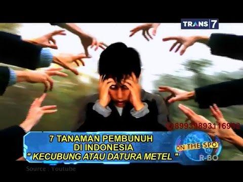 On The Spot - 7 Tanaman Pembunuh di Indonesia