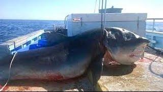 7 echte Kreaturen, die beim Fischen gefunden wurden
