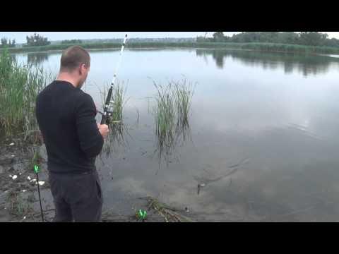 как заработать на рыбалке видео