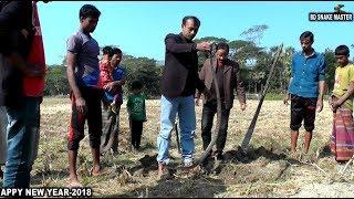 Bare Handed Venomous Snake Catching by Snake Master Razzak Biswash in Bangladesh Episode -42 | HD