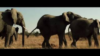 Funny elephant clip from The Brothers Grimsby(2016)