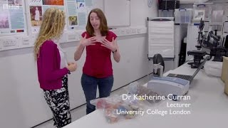 Hiddenkillers of the Postwar Home BBC4 - Katherine Curran, UCL ISH