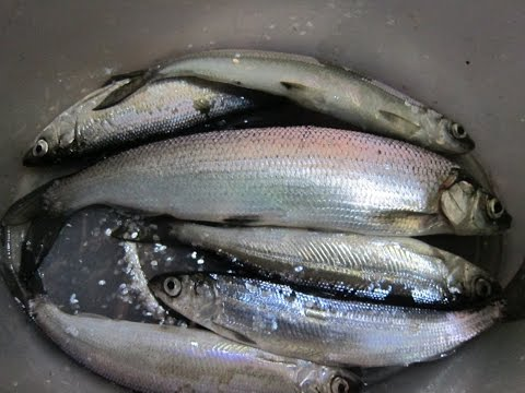 клев рыбы на озере парное