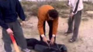 Terrorista corta cabeça de rapaz - Cenas Fortes