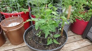 How To Build an Inexpensive 4-6 ft Tomato, Cucumber & Vine Crops Trellising Cages: DIY from Fencing