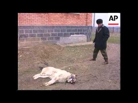 CHECHNYA: MARTAN-CHU: ALLEGED RUSSIAN ATROCITIES