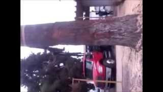 tala extraccion de arboles peligrosos poda de palmeras y limpieza de sitios